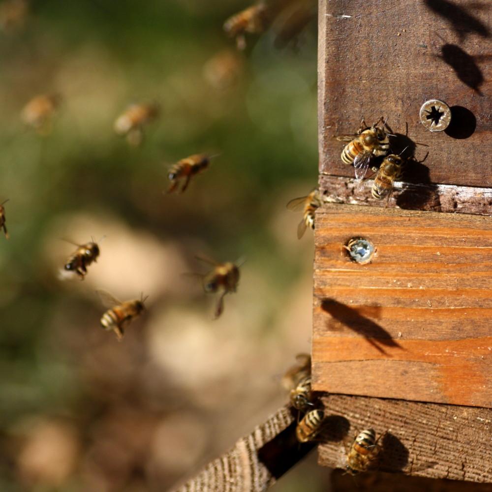 Bienenjahr Flugloch