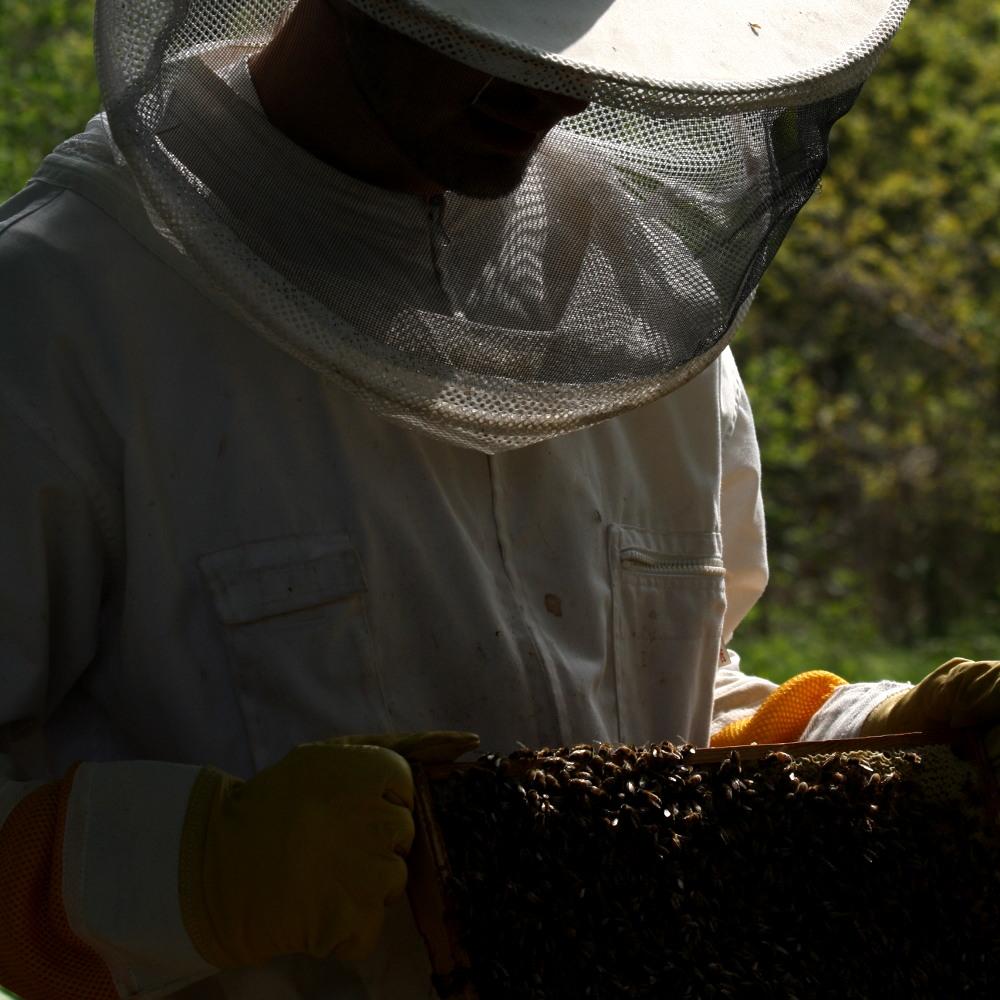 Bienenschwarm Einfangen 3